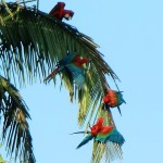 messing macaws